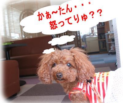 9_convert_20090618142409.jpg