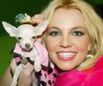 Britney_Chiwawa.jpg