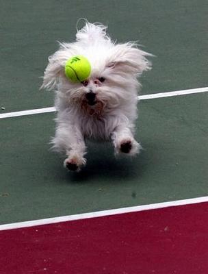 Gavin_Play-Tennis3.jpg
