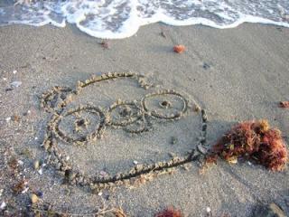 砂浜に・・・
