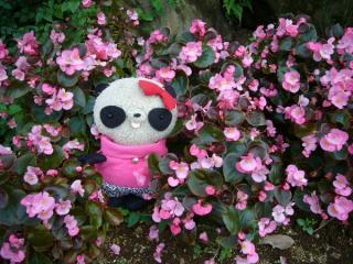 お花に囲まれウキウキ