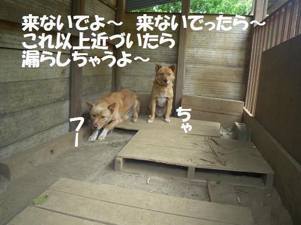 間宮 2'