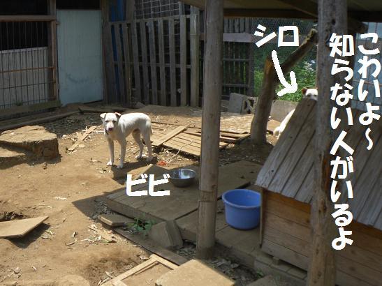 間宮 3'