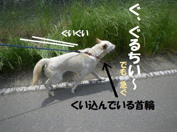 間宮 5'