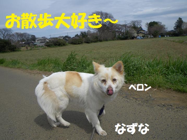 IMGP0318.jpg