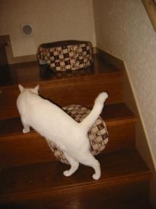 猫ベット1