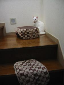 不思議猫ベット