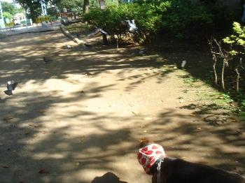 2008.10.22 ホメオパシーへ 002
