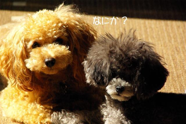 2008.10.11ハローウィンプレゼント&日向ぼっこ 001 (Small)