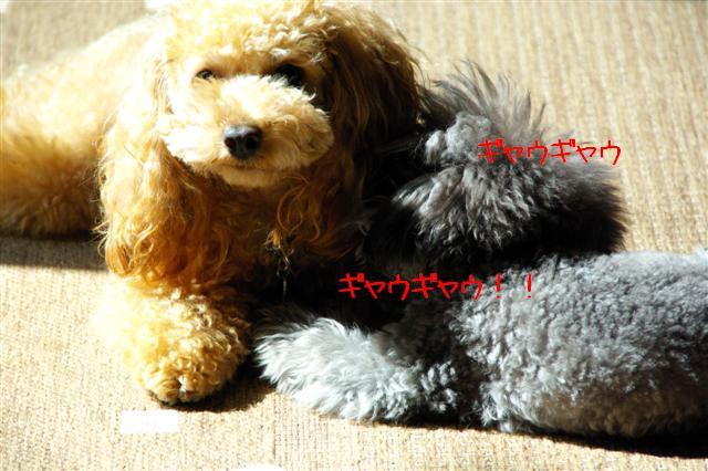 2008.10.11ハローウィンプレゼント&日向ぼっこ 012 (Small)