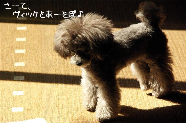 2008.10.11ハローウィンプレゼント&日向ぼっこ 019 (Small)