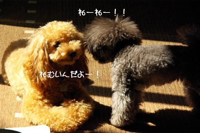2008.10.11ハローウィンプレゼント&日向ぼっこ 023 (Small)