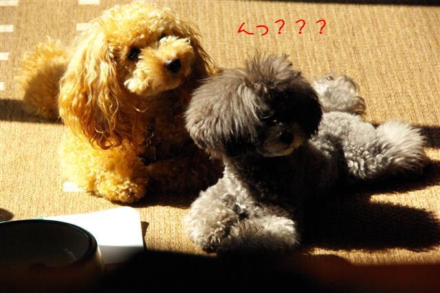 2008.10.11ハローウィンプレゼント&日向ぼっこ 043 (Small)