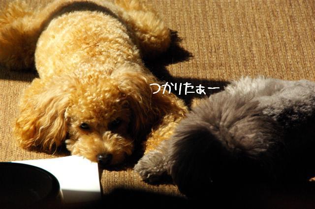 2008.10.11ハローウィンプレゼント&日向ぼっこ 054 (Small)