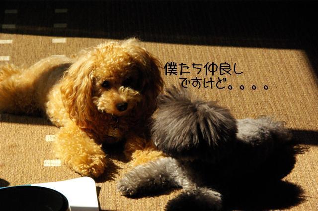 2008.10.11ハローウィンプレゼント&日向ぼっこ 065 (Small)