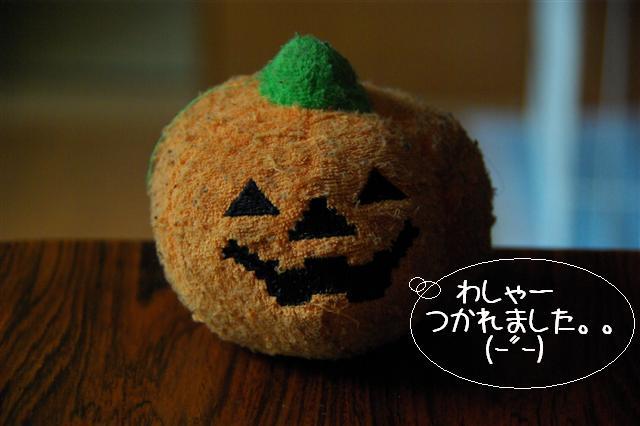 2008.10.11ハローウィンプレゼント&日向ぼっこ 094 (Small)