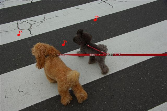 2008.10.232頭引きお散歩 050 (Small)