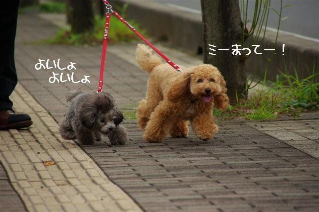 2008.10.232頭引きお散歩 059 (Small)