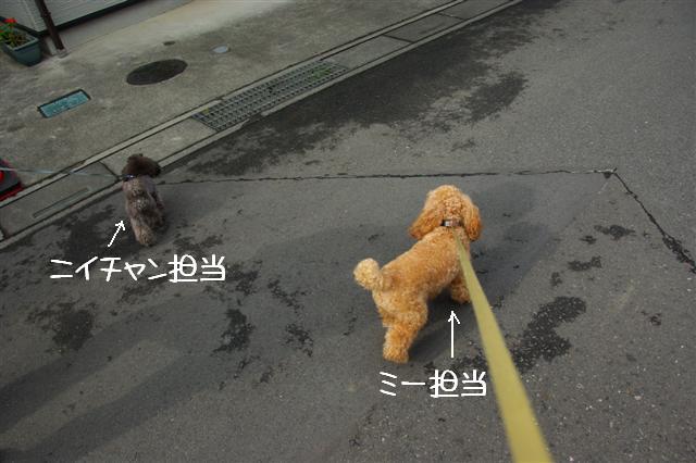 2008.10.232頭引きお散歩 081 (Small)