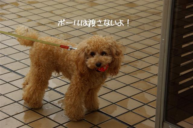 2008.10.232頭引きお散歩 087 (Small)