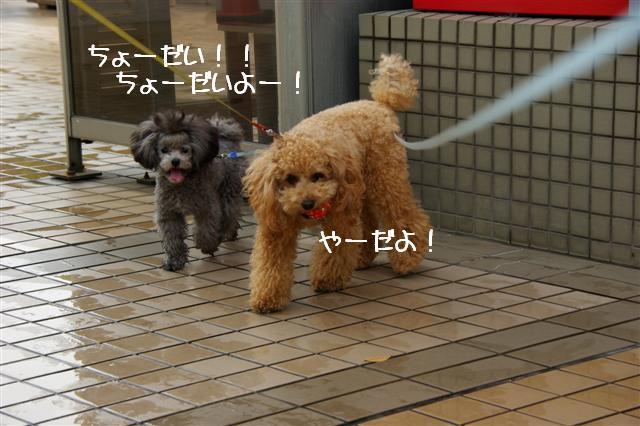 2008.10.232頭引きお散歩 099 (Small)