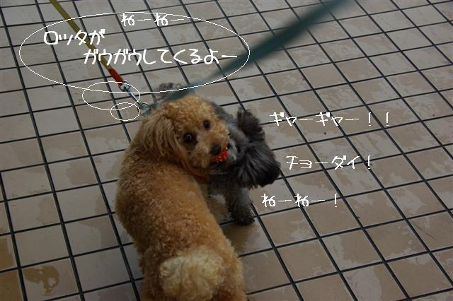 2008.10.232頭引きお散歩 102 (Small)