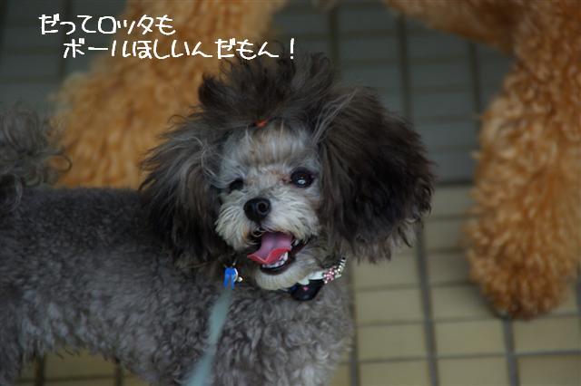 2008.10.232頭引きお散歩 108 (Small)