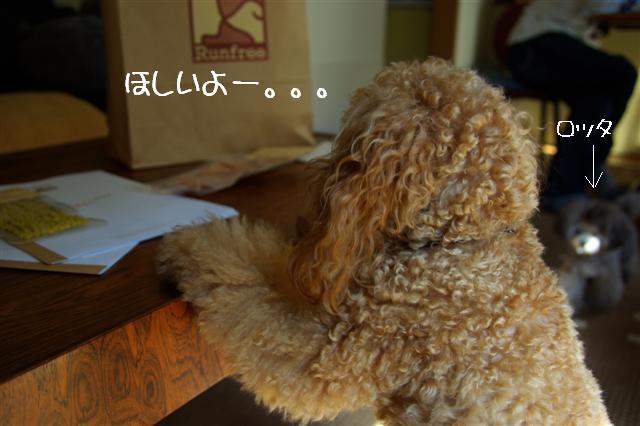 2008.10.26ランフリー 068 (Small)