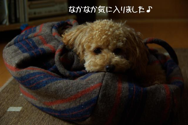 2008.10.26ランフリー 104 (Small)