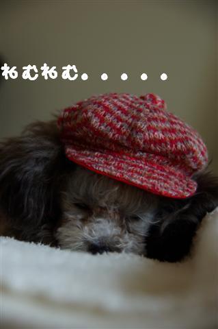2008.10.31帽子 106 (Small)