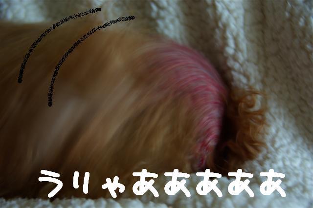 2008.10.31帽子 156 (Small)