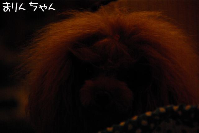2008.11.3トリミング&お友達 031 (Small)