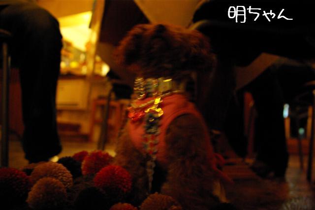 2008.11.3トリミング&お友達 037 (Small)