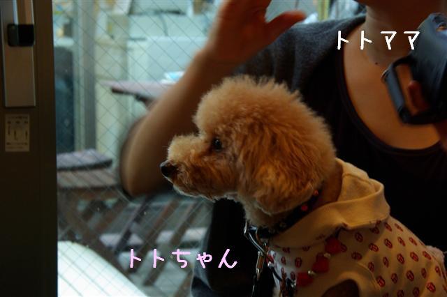 2008.11.3トリミング&お友達 186 (Small)