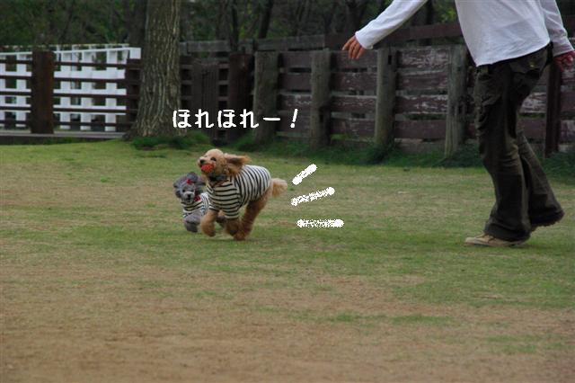 2008.11.6ヴィッケ2歳誕生日 340 (Small)