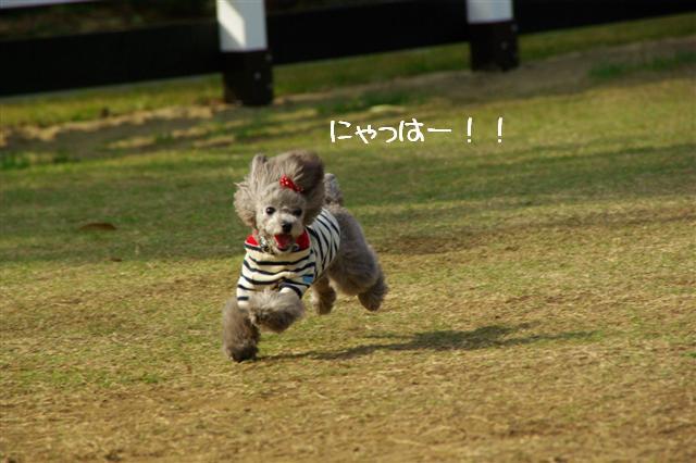 2008.11.6ヴィッケ2歳誕生日 063 (Small)