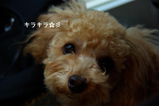 2008.11月横浜・国立・昭和記念公園 082 (Small)