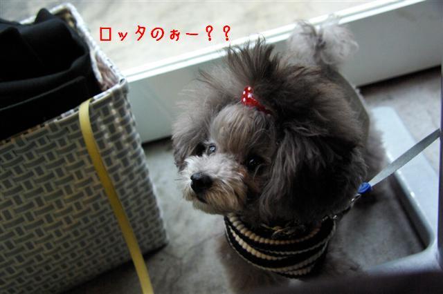2008.11月横浜・国立・昭和記念公園 036 (Small)
