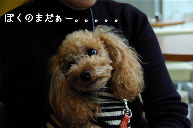 2008.11月横浜・国立・昭和記念公園 061 (Small)