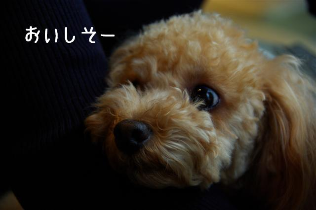 2008.11月横浜・国立・昭和記念公園 101 (Small)