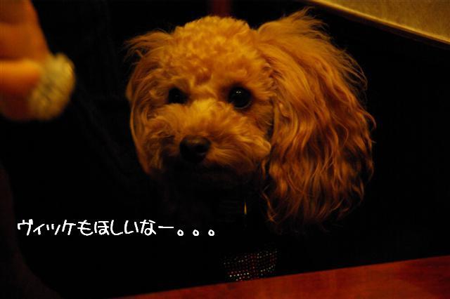 2008.11月横浜・国立・昭和記念公園 111 (Small)