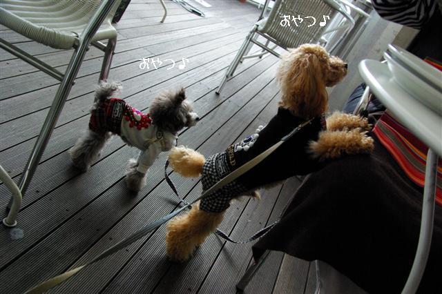 2008.11月横浜・国立・昭和記念公園 135 (Small)