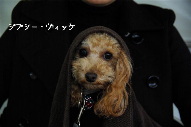 2008.11月横浜・国立・昭和記念公園 164 (Small)