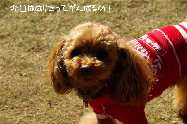 2008.11月ゼブラ運動会 004 (Small)