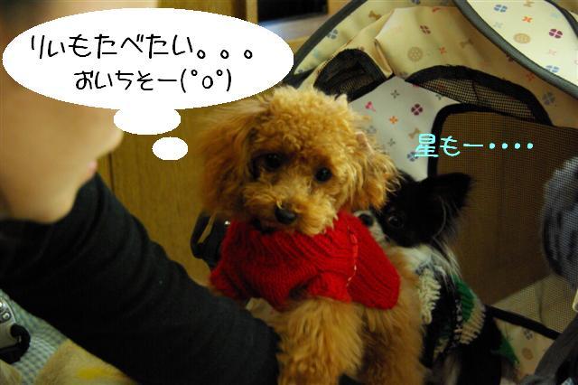 2008.12月りぃ&キラちゃんと 011 (Small)