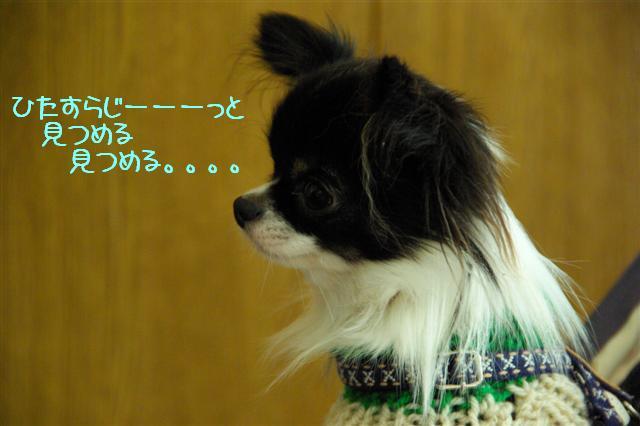 2008.12月りぃ&キラちゃんと 026 (Small)