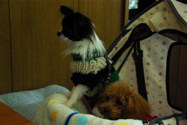 2008.12月りぃ&キラちゃんと 027 (Small)