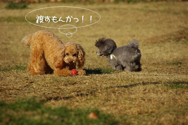 2008.12月豊橋帰省 027 (Small)