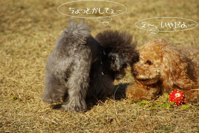 2008.12月豊橋帰省 051 (Small)