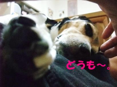 コピー ~ DSCF1921